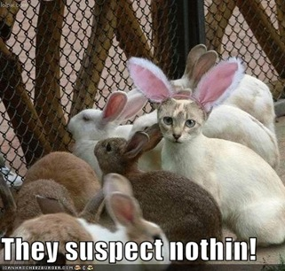 funny-pictures-cat-disguised-rabbit