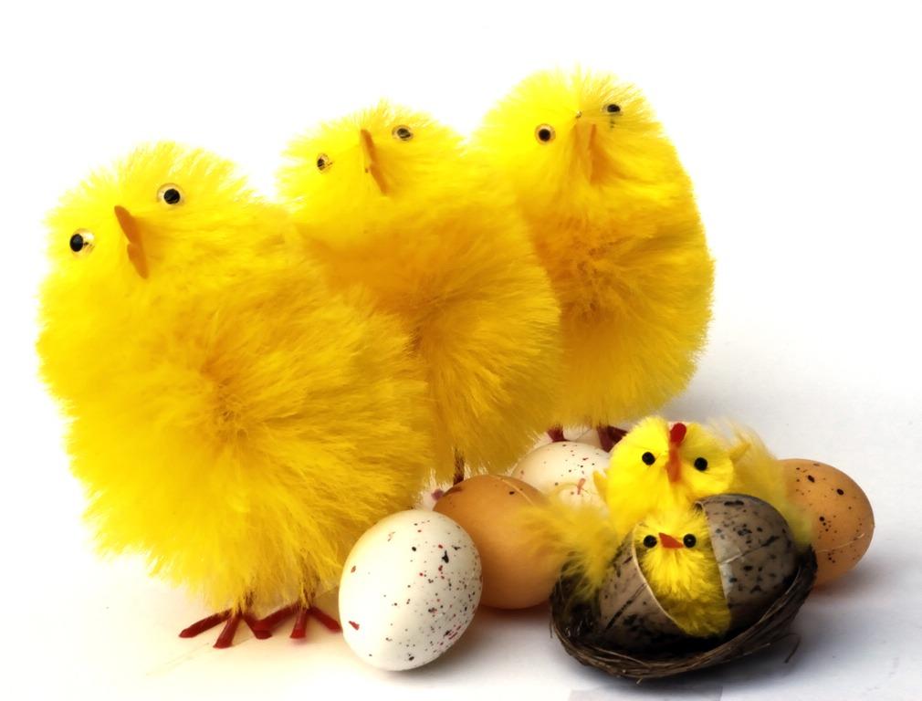 пилета, яйца