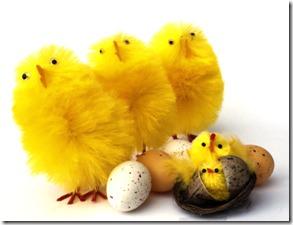 høns, æg