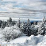 winterwhite.jpg