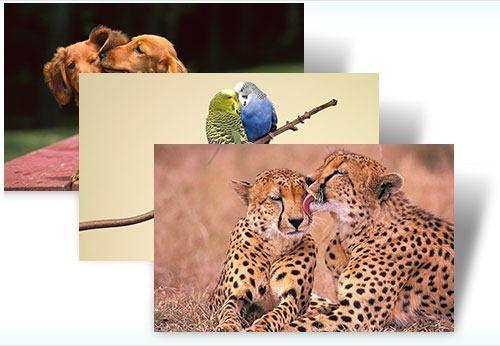 Gyvūnų meilė
