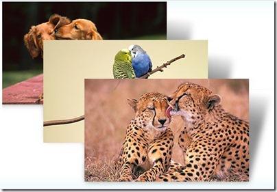 Animal-αγάπη