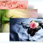 Rosestheme.jpg
