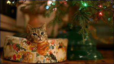 Рождественская кошка